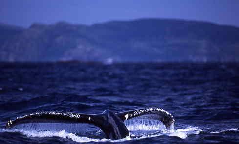 04初鯨~1.JPG